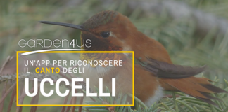 canto uccelli
